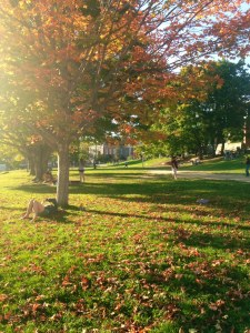Fall at App State is beautiful!