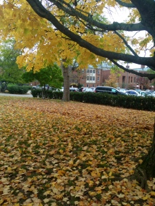 Talk about leaves!