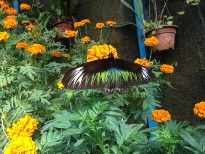 butterflymalaysia